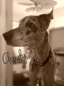 Cloudy - The Great Dane