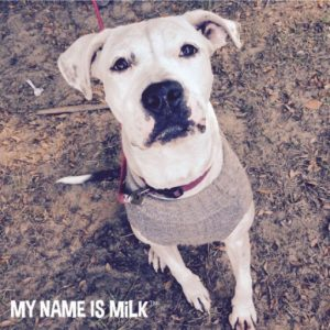 My Name Is Milk