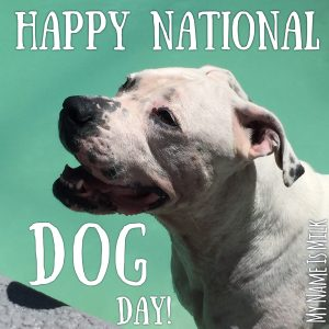 National-Dog_day