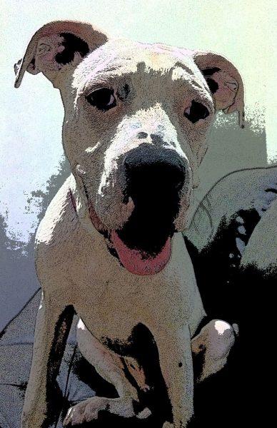 Pitbull Puppy Dog Poster