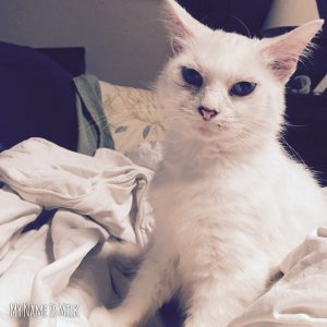 Albino White Cat