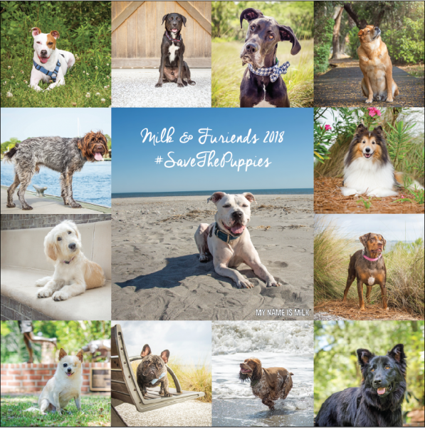 2018 dog calendar fundraiser
