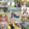 2019 Milk dog calendar
