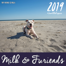 2019 Calendar to Save The Puppies